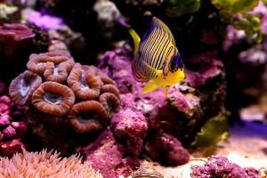 underwater cool wallpaper