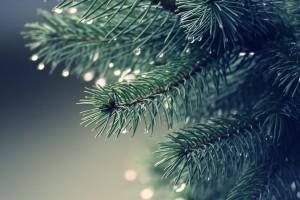 water dew drops tree