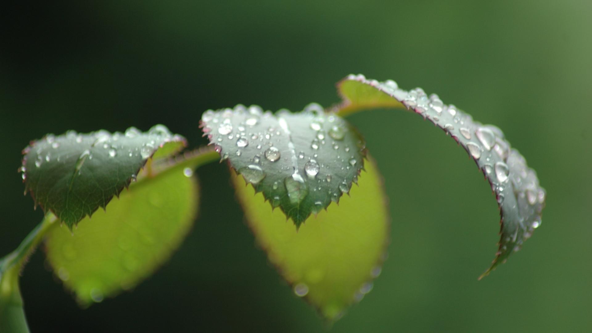 1080p leaves