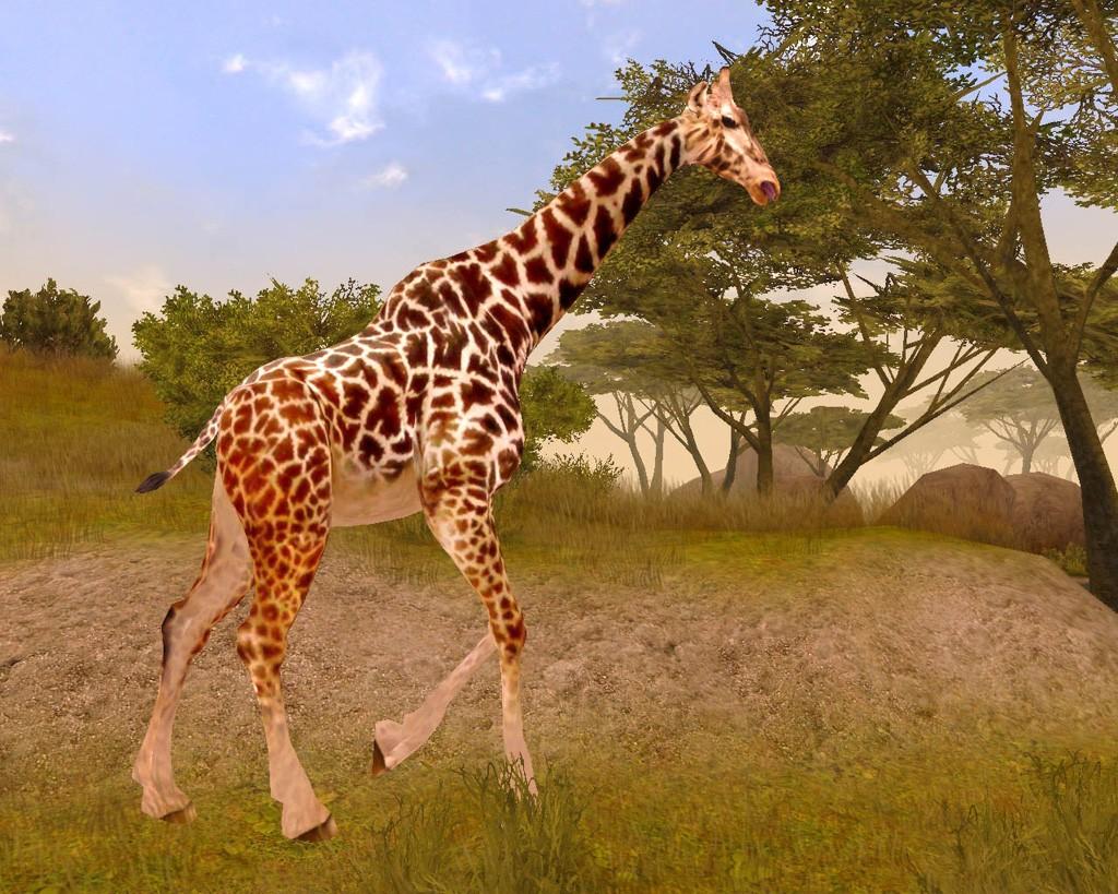 african safari wallpaper