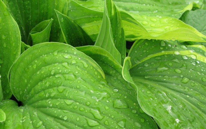 after rain green picture