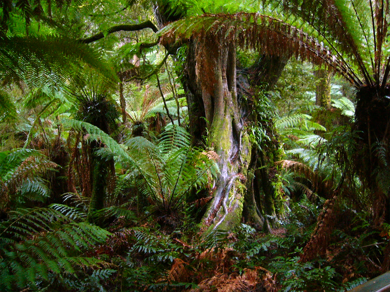 amazon forest wallpaper nature