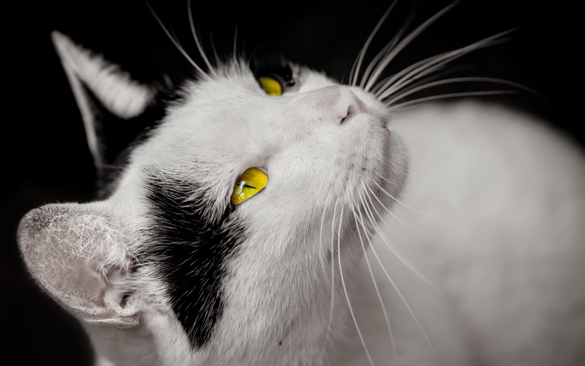 animal eye wallpaper beautiful