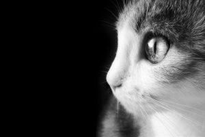 animal eye wallpaper download
