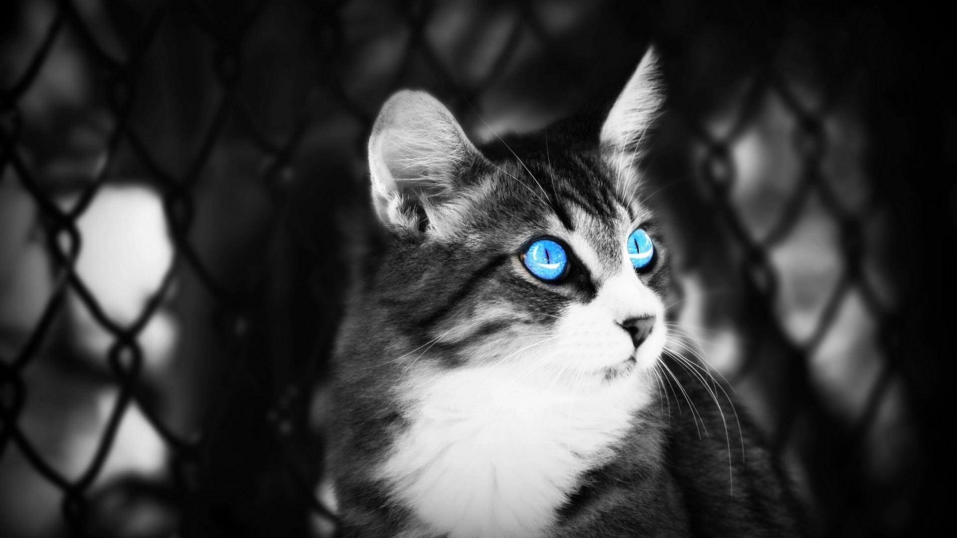 animal eyes blue
