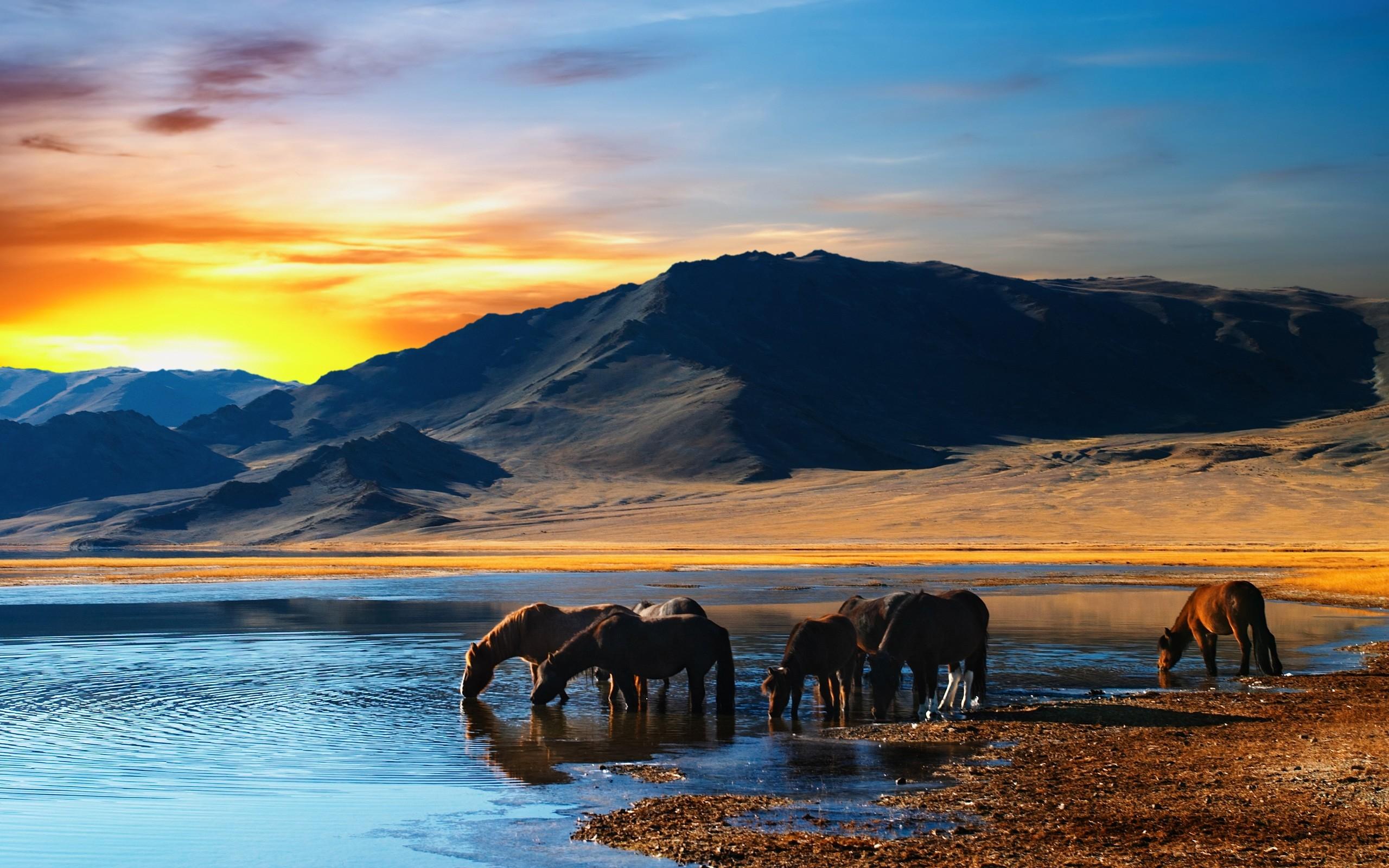 animal herd landscape