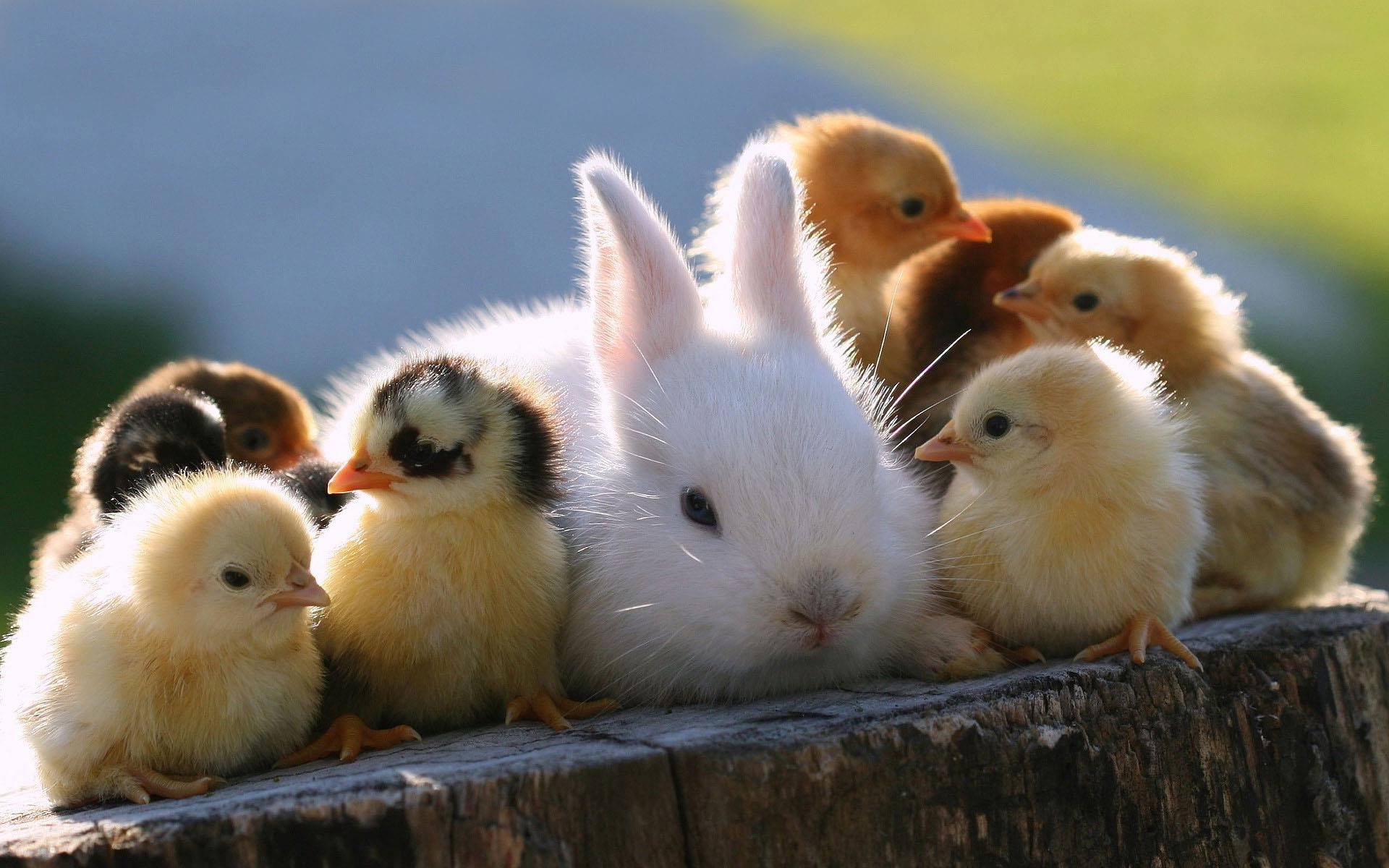 animals cute pictures