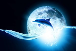 animated dolphin wallpaper