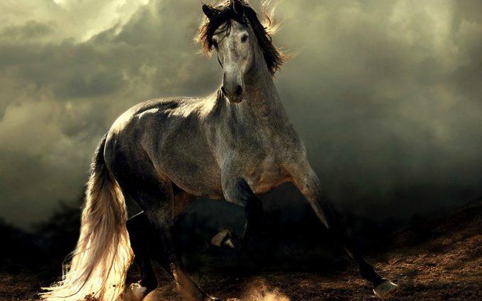 Arabian Horse Beautiful - Hd Desktop Wallpapers  4K Hd-7119