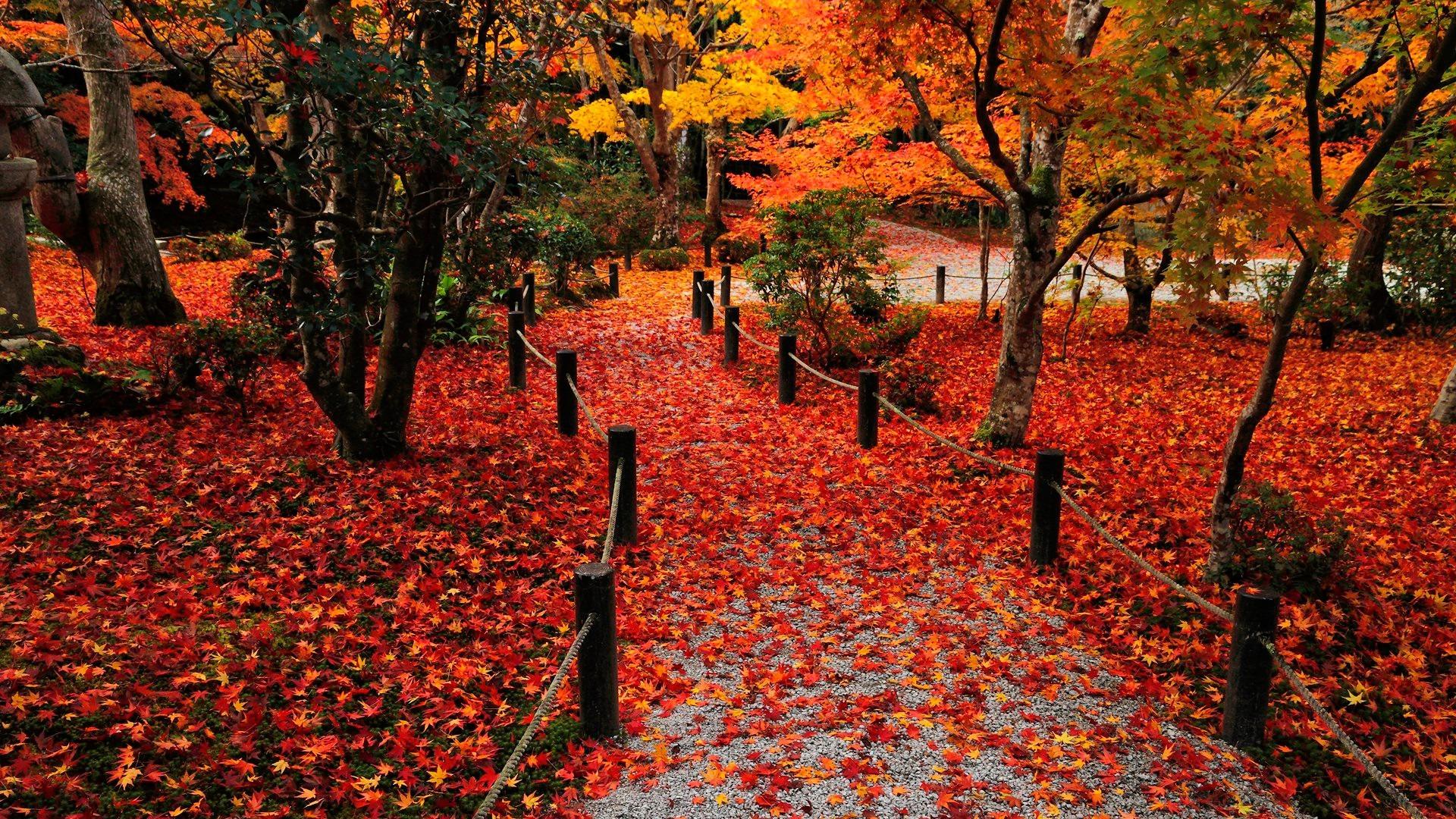 autumn background images