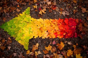 autumn leaves cool wallpaper