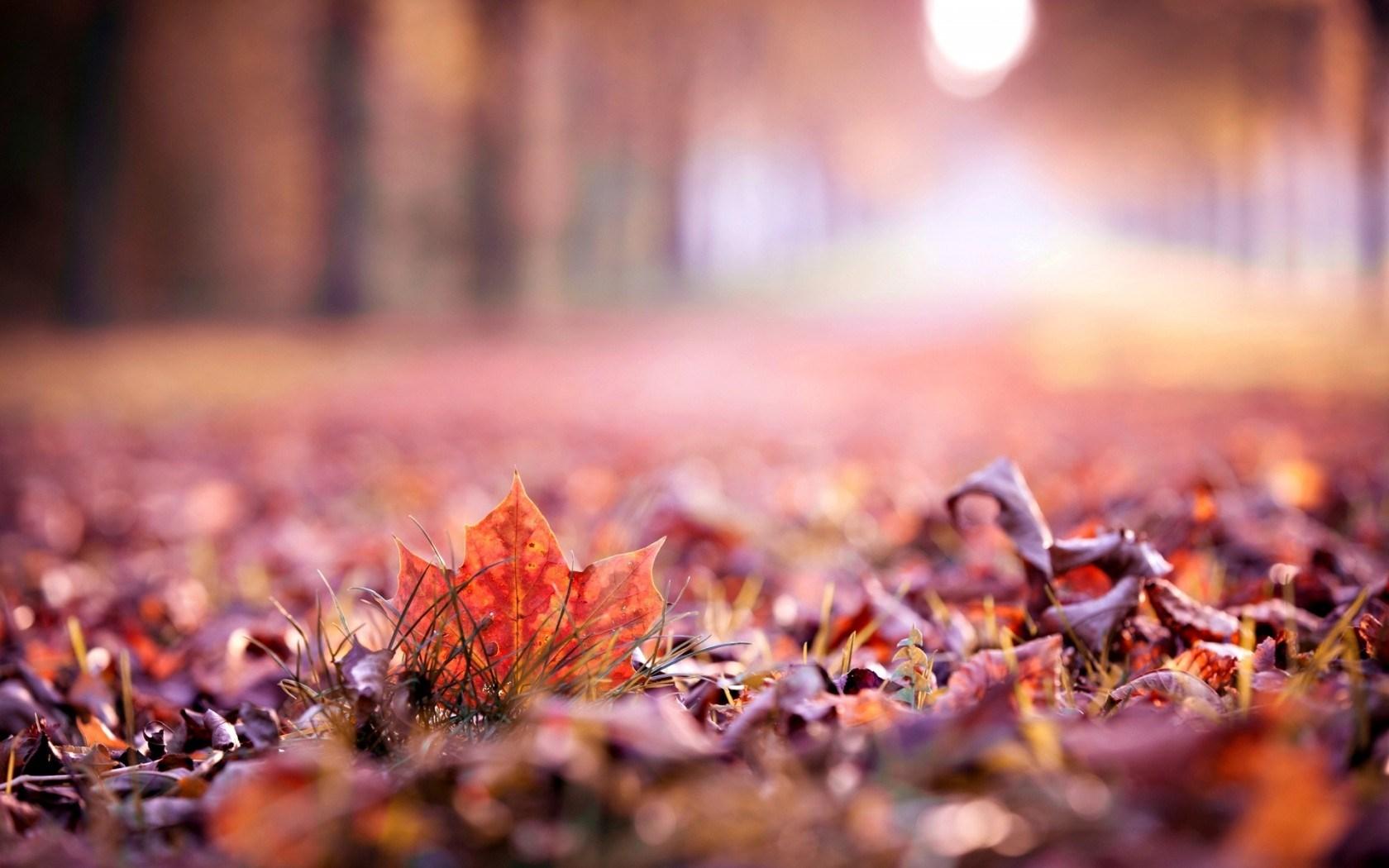 Autumn Leaves Photography Hd  HD Desktop Wallpapers 4k