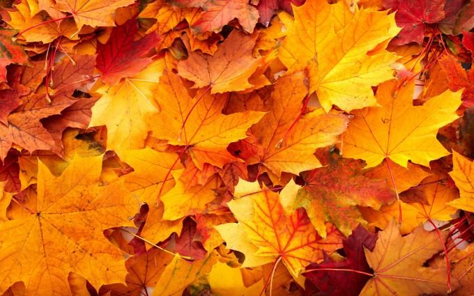 autumn leavesbackground