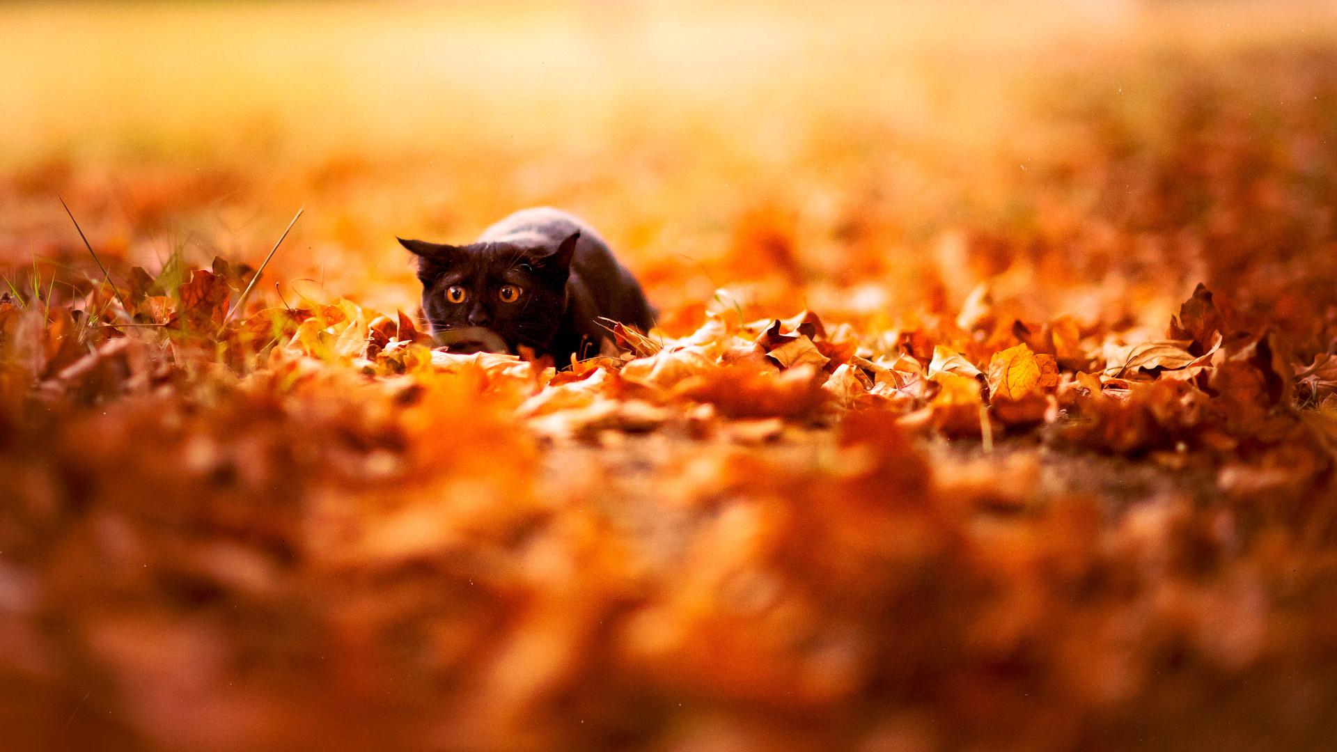 autumn wallpaper orange