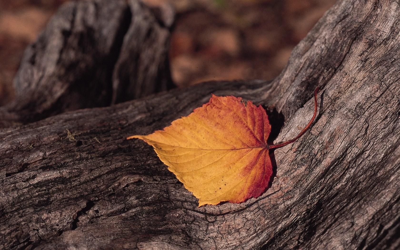 autumn wallpapers for desktop