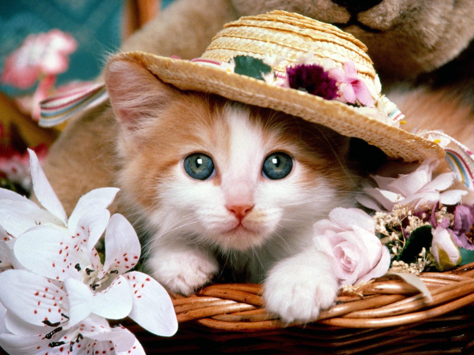 baby cats wallpapers