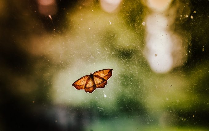 backgrounds of butterflies