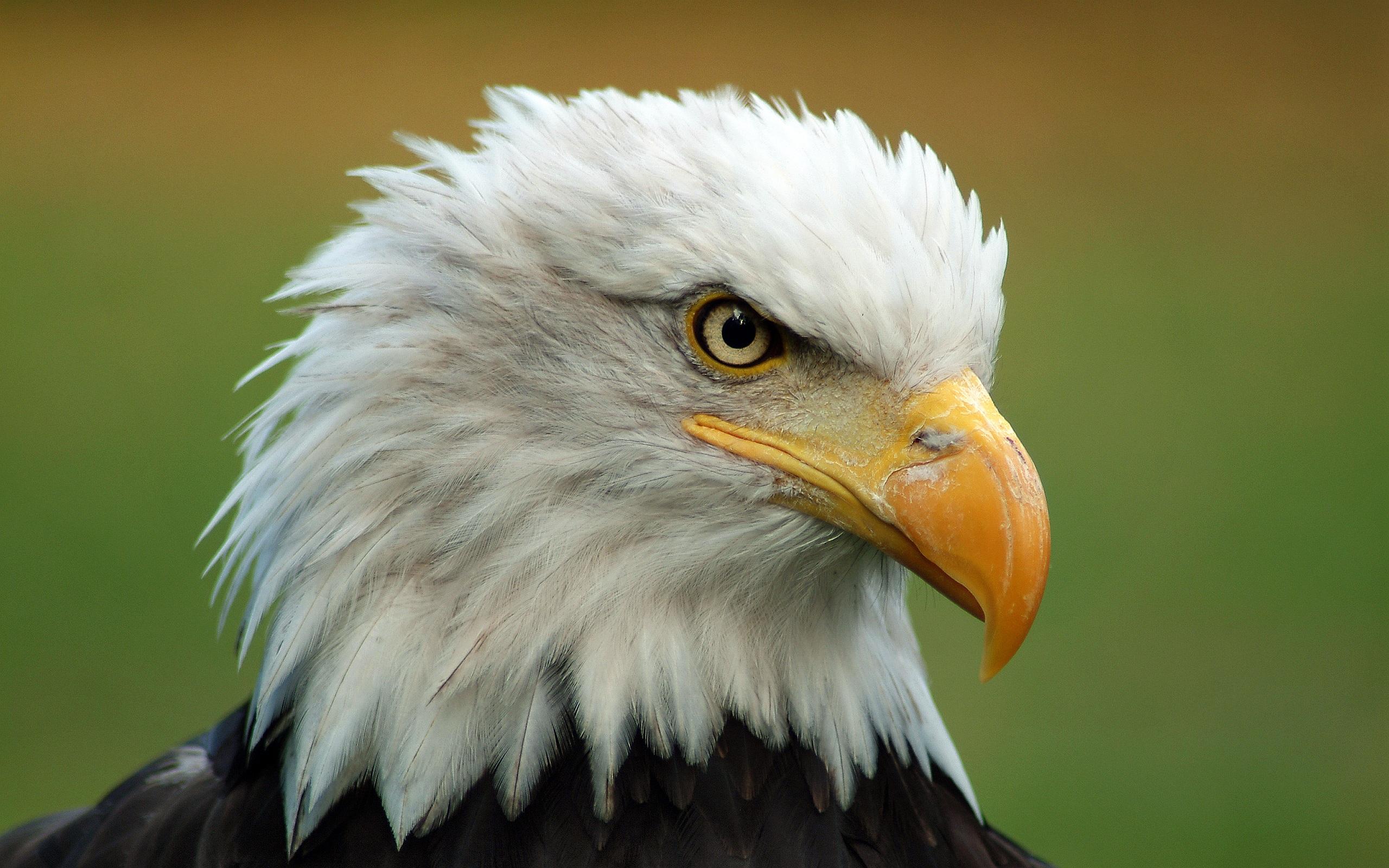 Free Eagles Kriminalität