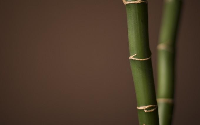 bamboo wallpaper A12