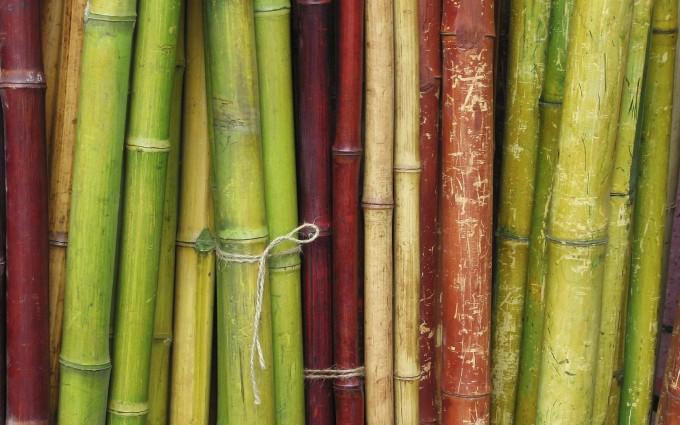 bamboo wallpaper trees