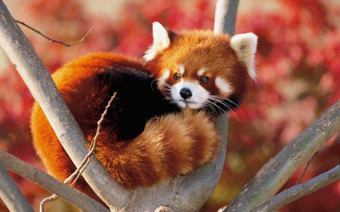 beautiful animal photo