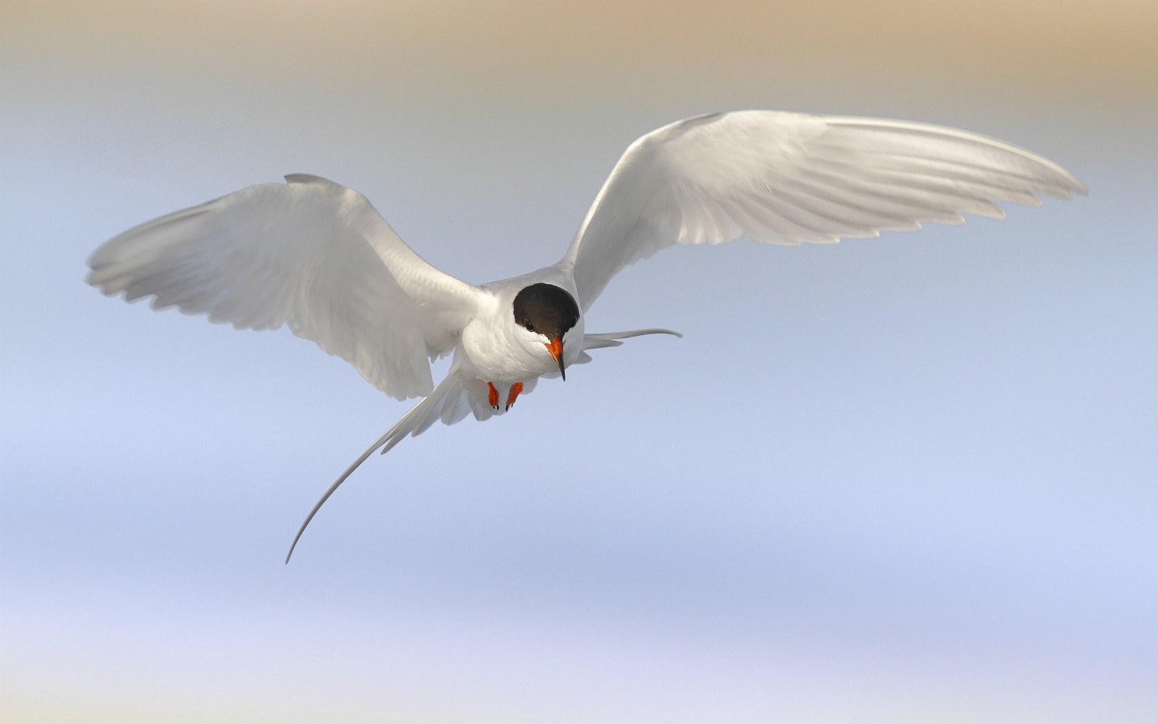 beautiful birds hd images