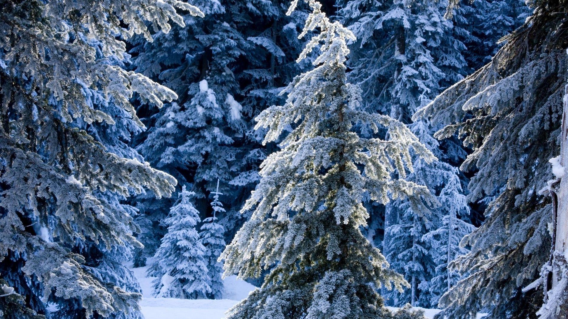 beautiful frosty wallpaper