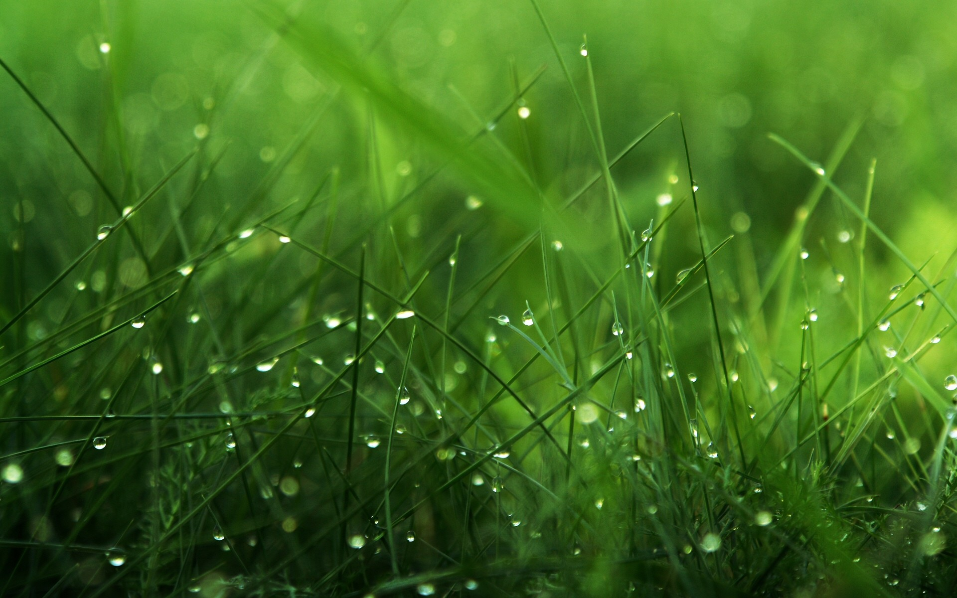 Beautiful grass pictures hd desktop wallpapers 4k hd for Beautiful pictures