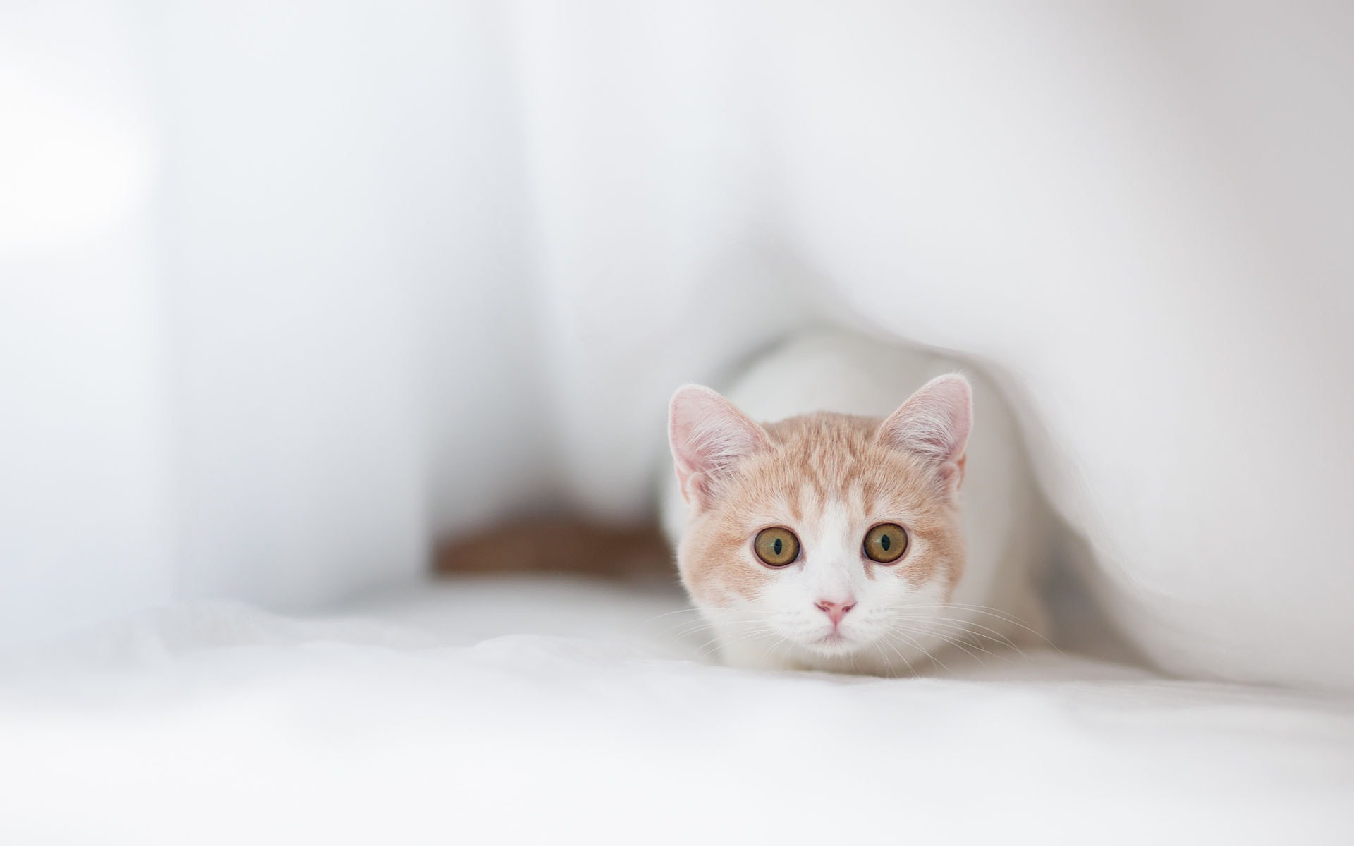 beautiful kittens wallpapers