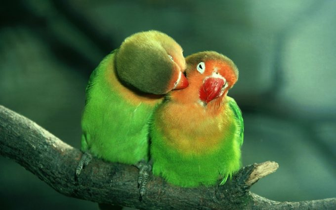 beautiful parrot photos