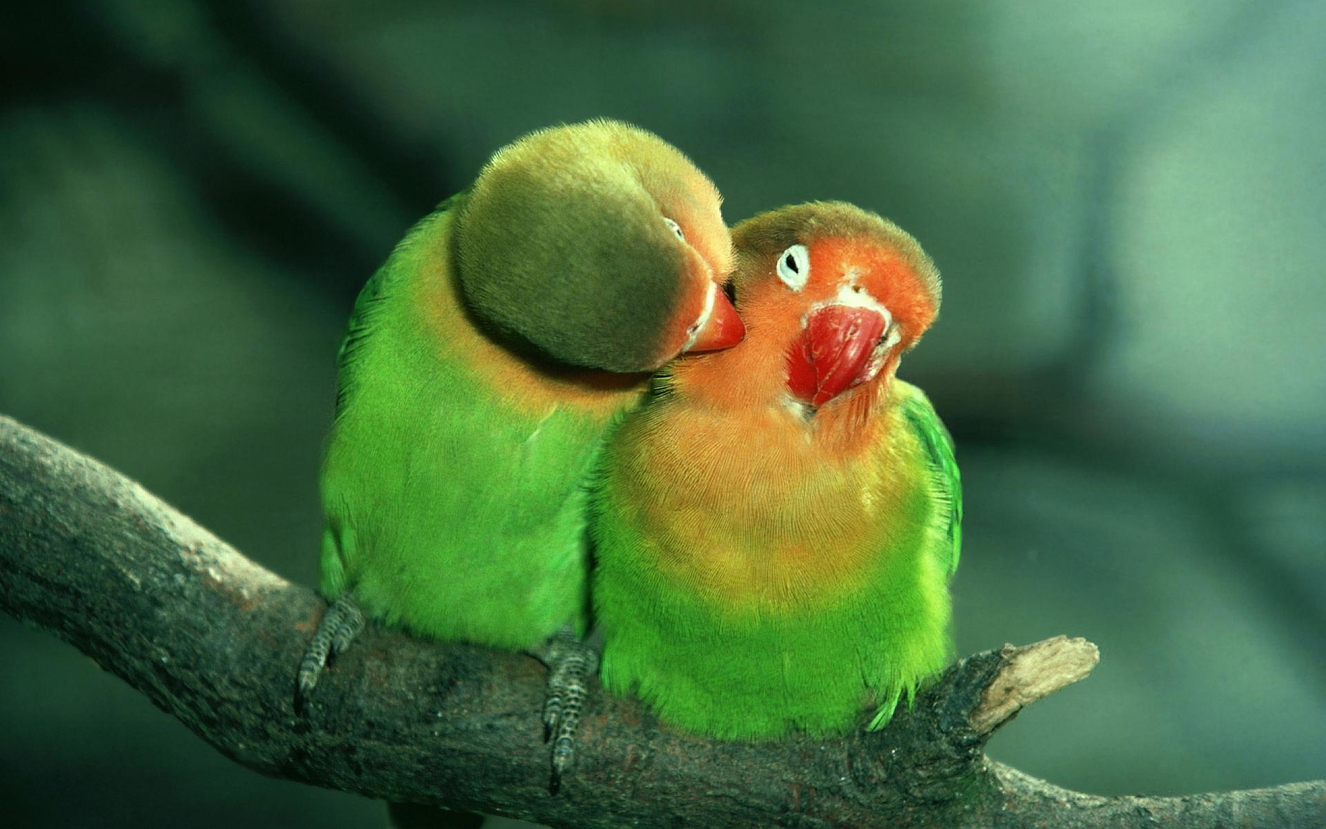 beautiful parrot photos