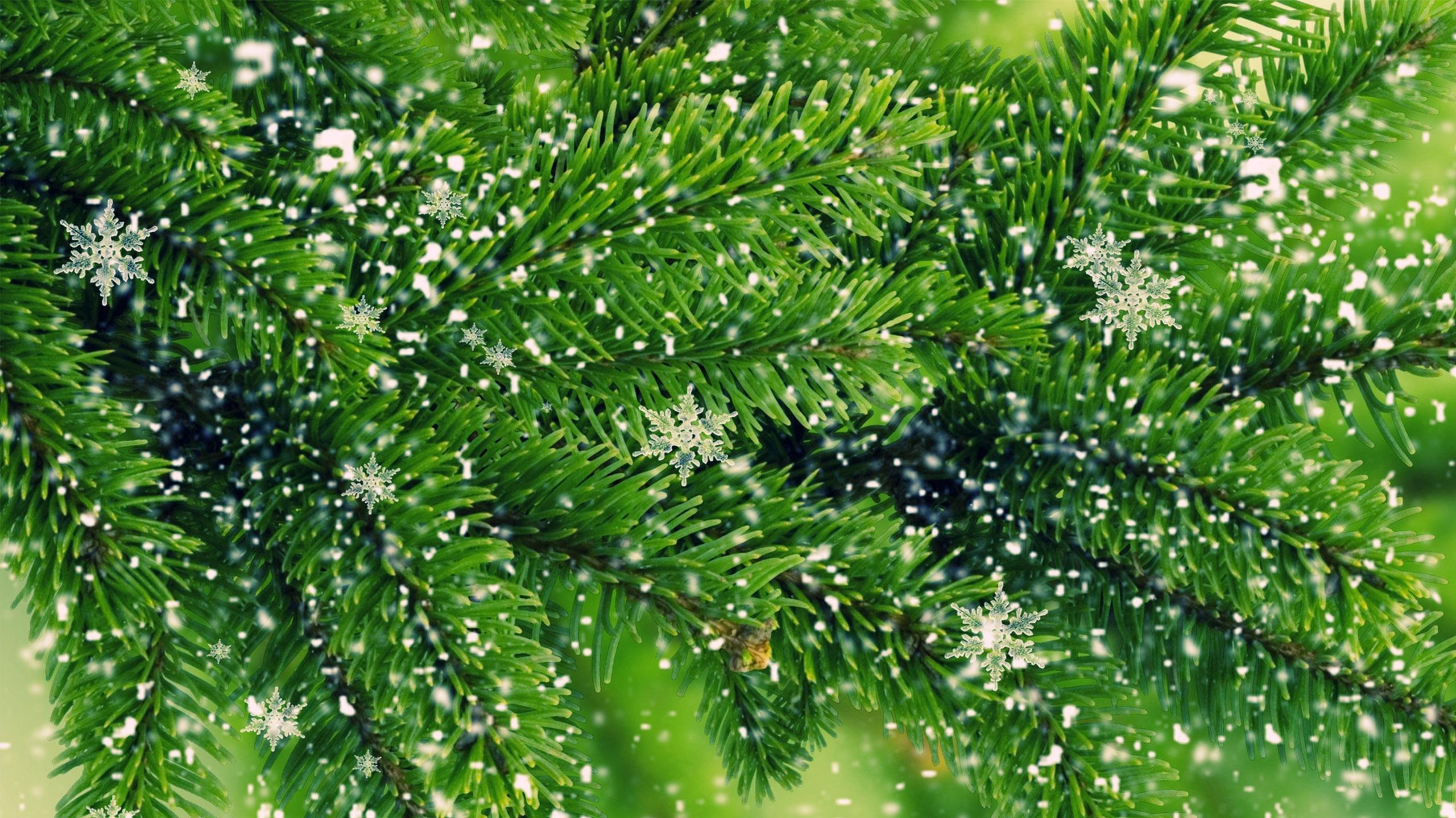 beautiful pine