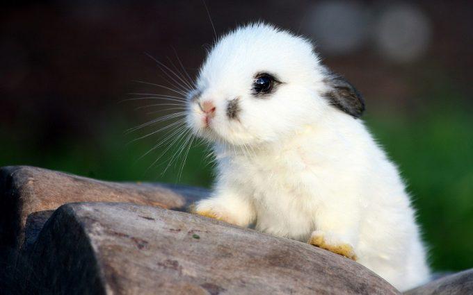 beautiful rabbit wallpapers