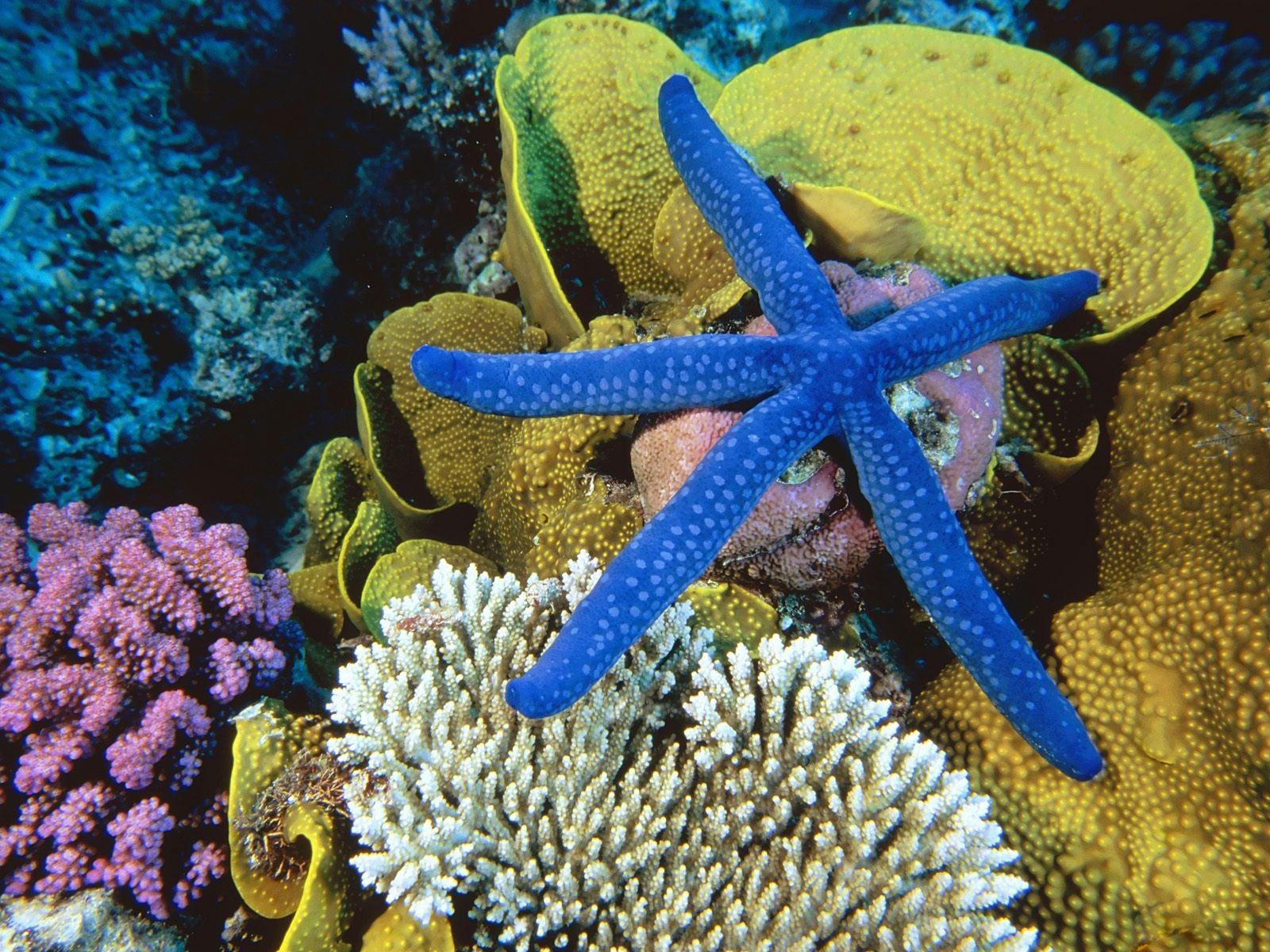 beautiful reef wallpaper