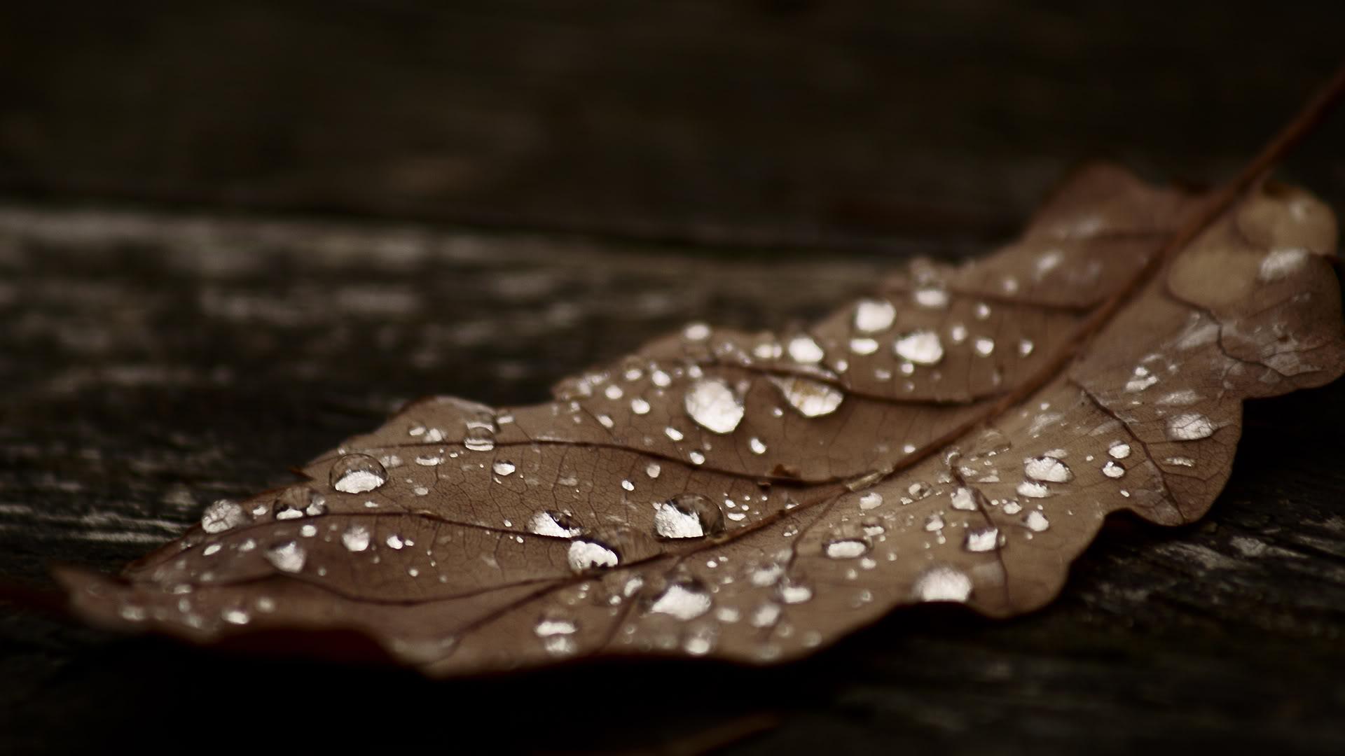 beautiful wallpaper dry leaf