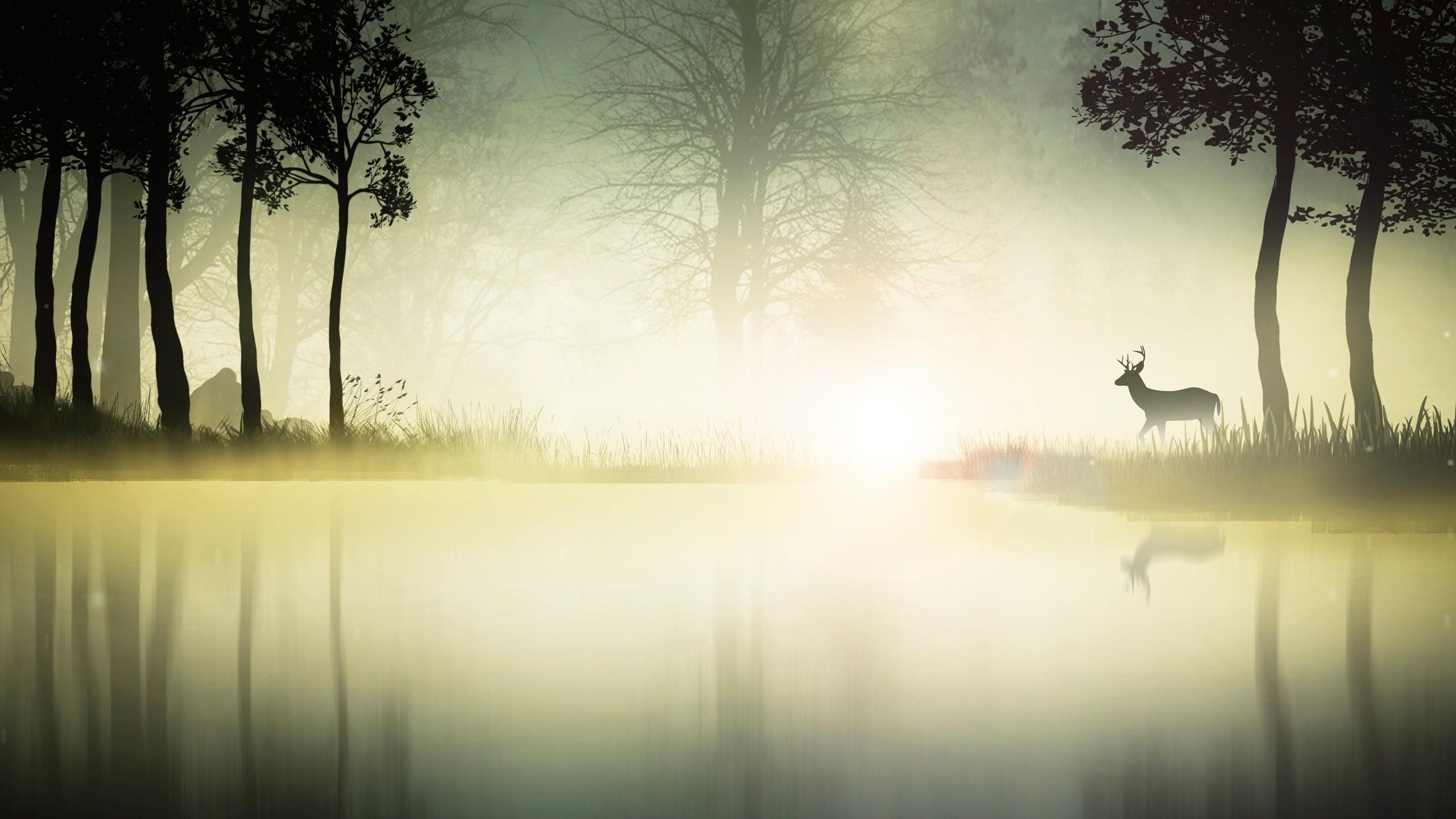 beautiful wallpaper fog