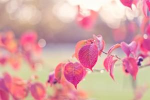 beautiful wallpaper pink