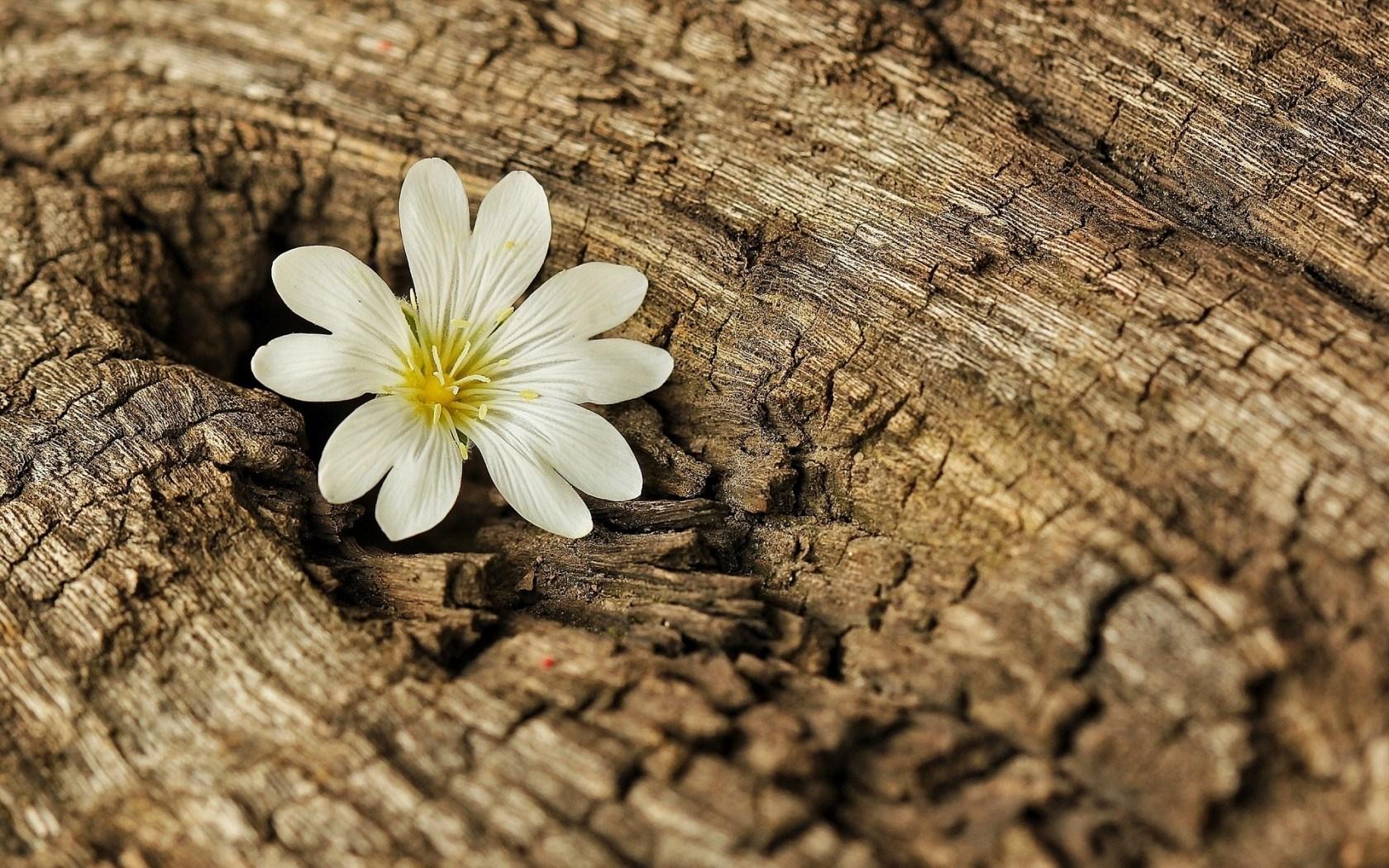 beautiful wallpaper tree bark