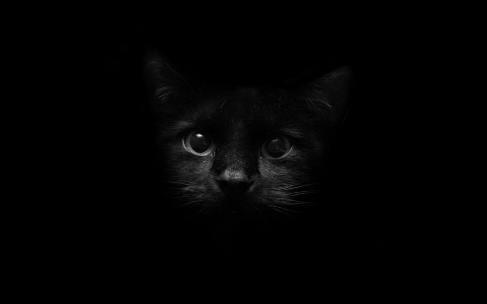 beautiful wallpapers of cats