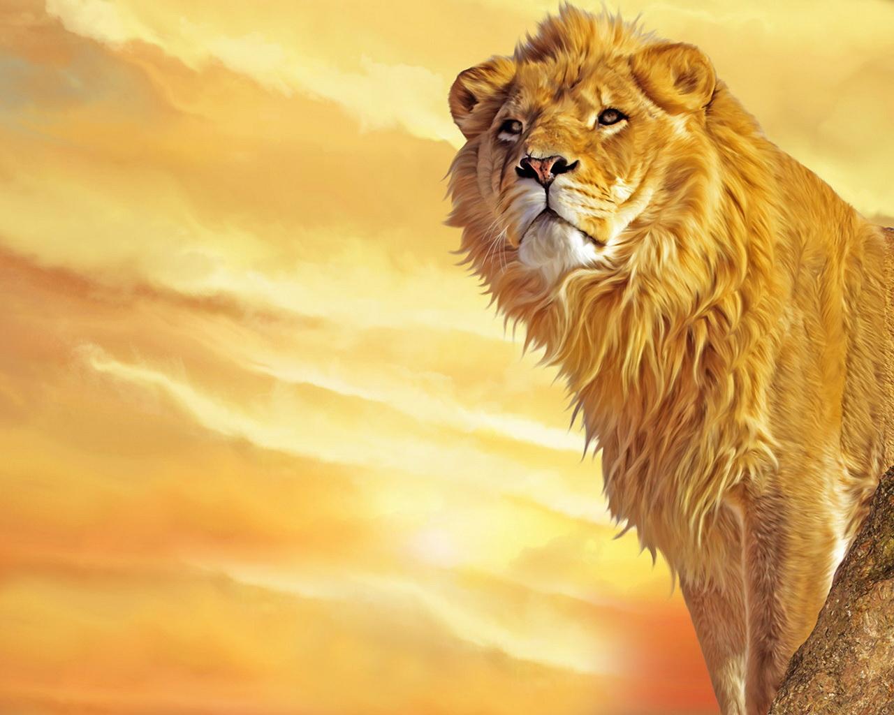 best lion pictures