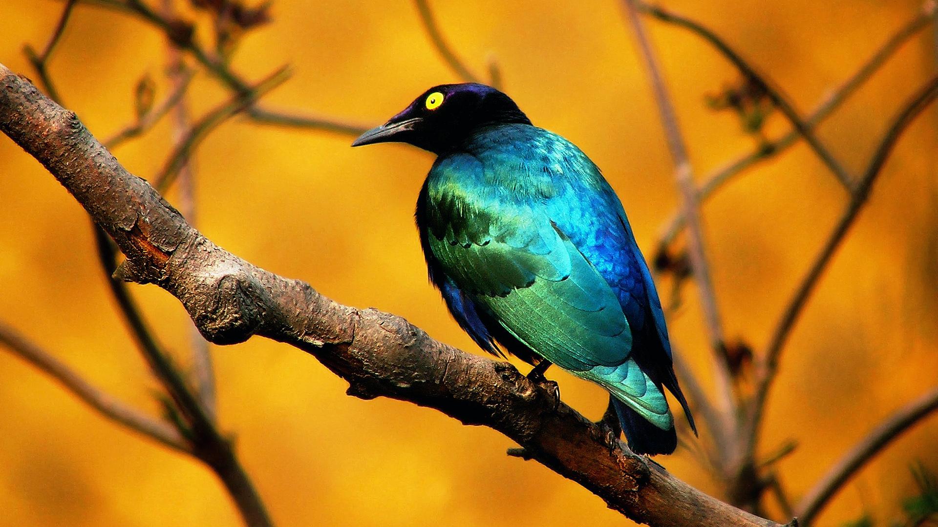 bird wallpaper downloads A1