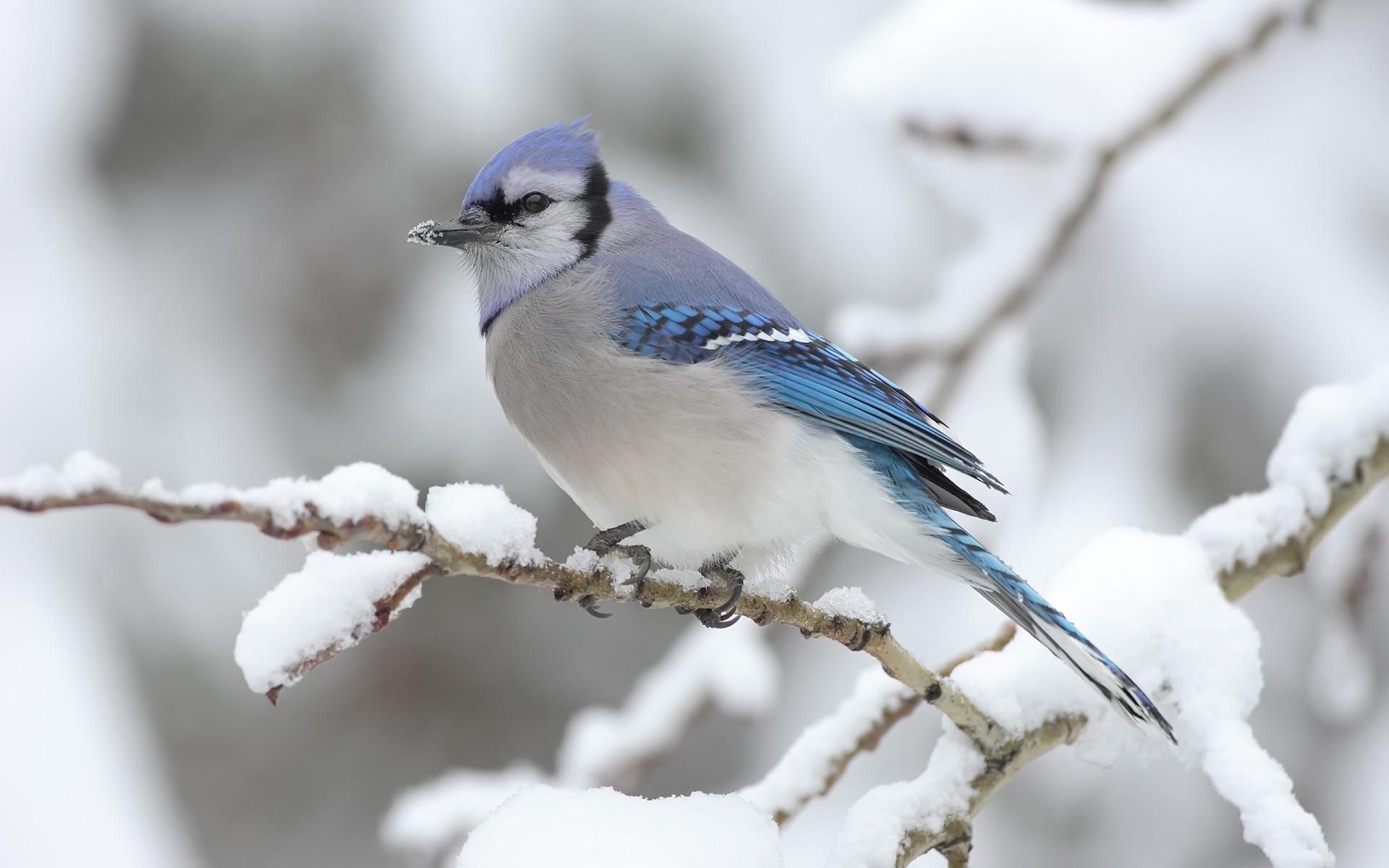 bird wallpaper downloads A9