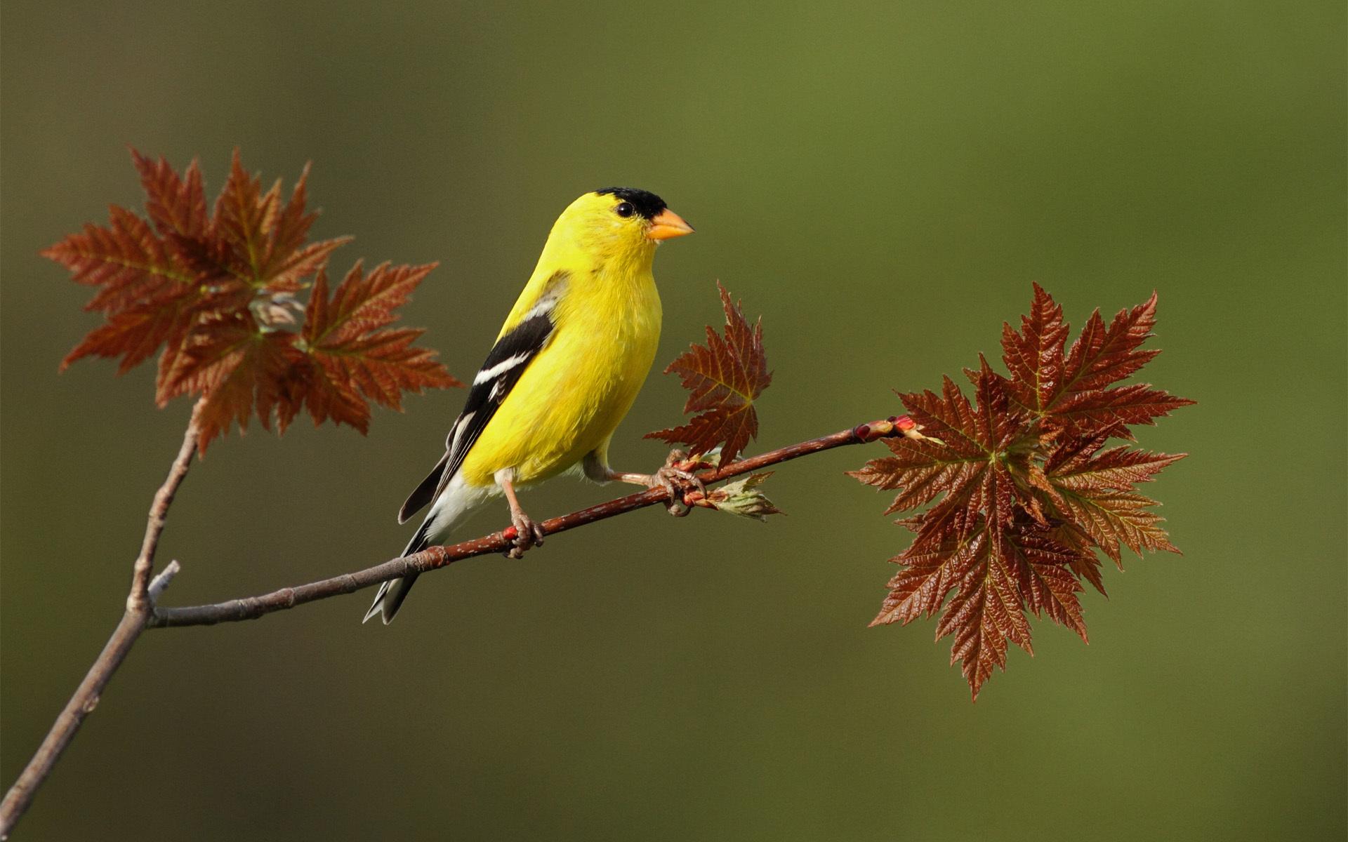 bird wallpaper free A2