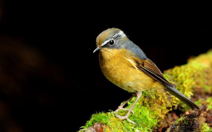 bird wallpaper free A4