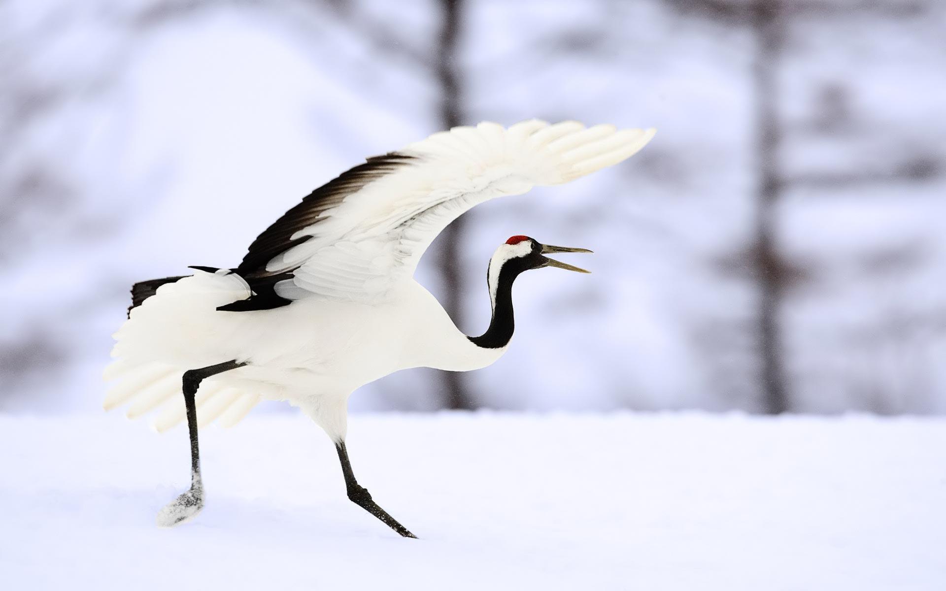 bird wallpaper free A5