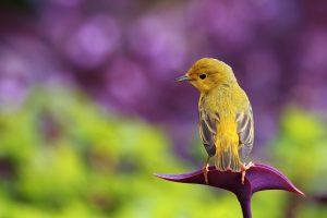 bird wallpaper yellow