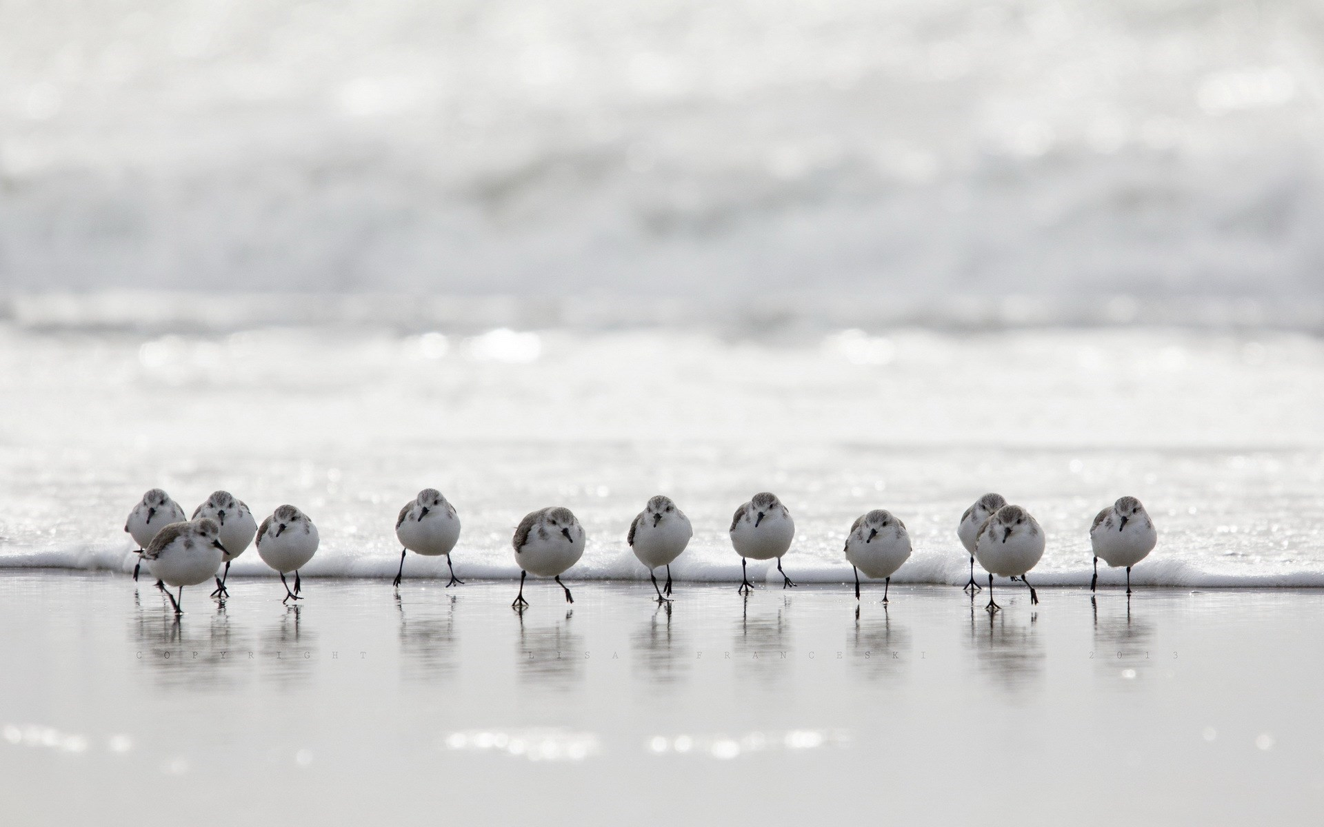 birds beach waves