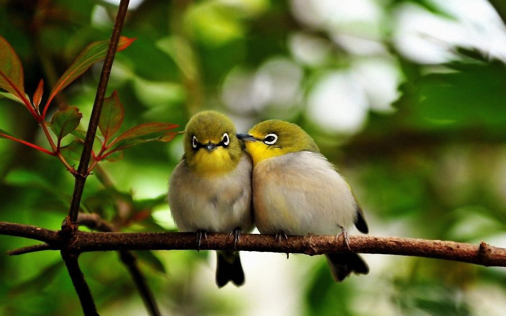 birds pictures cute