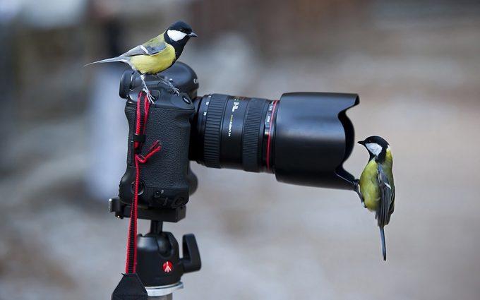 birds wallpaper in hd