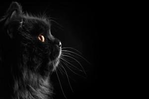 black cat download